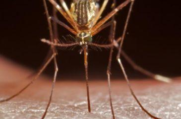 Les aspects entomologiques de l'épidémie du paludisme survenue en 2016 à Pawa, Haut-Uélé, en République Démocratique du Congo